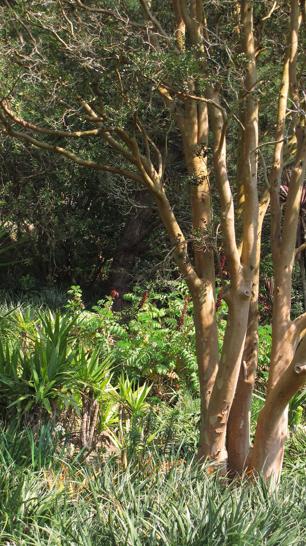 mediterannean plants, euphorbia, phormium, myrtle, devon garden, yucca, melianthus major,