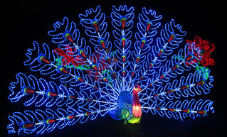 Kew Gardens Xmas Lights 2015
