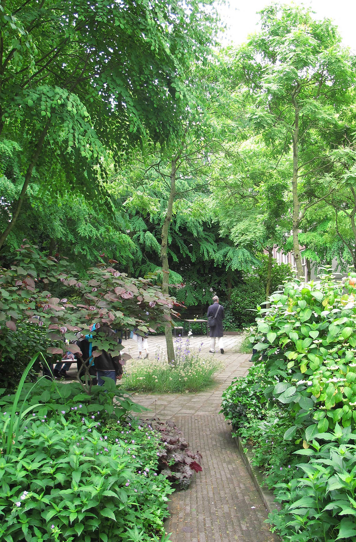 woodland garden,