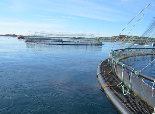 Featured in What does the salmon net pen of the future look like? article