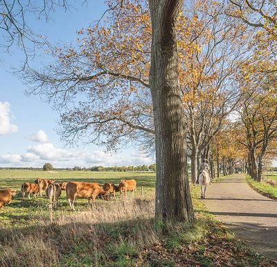 Brussel pompt miljarden in biologische landbouw: 'We moeten evenwicht herstellen in onze natuur'