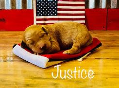 Goldendoodle litter July 6, 2018 3.jpg
