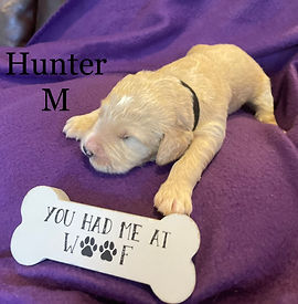 Hunter.jpg