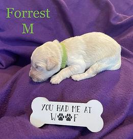Forrest.jpg
