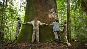 5 árvores incríveis pelo mundo que viraram atração turística