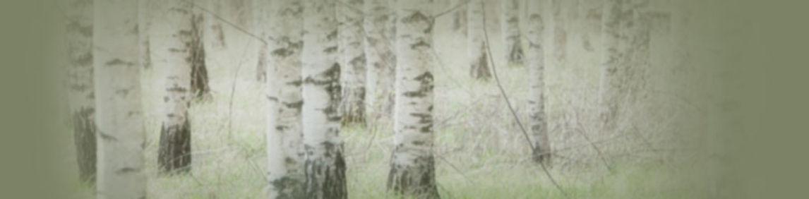 birchforest_1200px.jpg