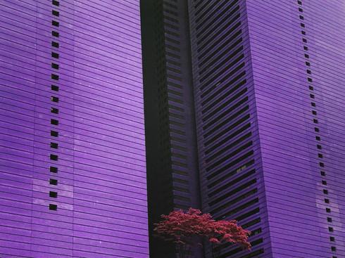 Dystopia en mauve