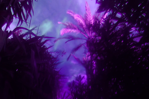 PurplePalms