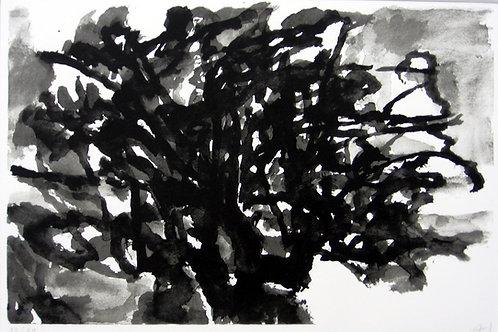 Hollan, Arbre noir