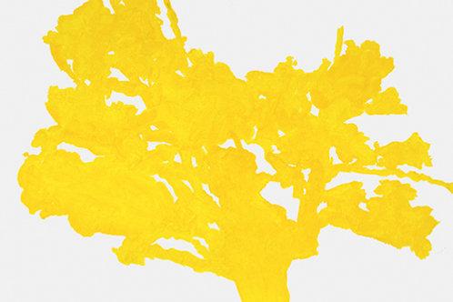 Hollan, Arbre jaune
