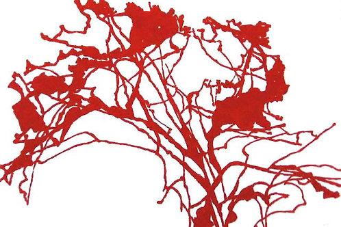 Hollan, Arbre rouge