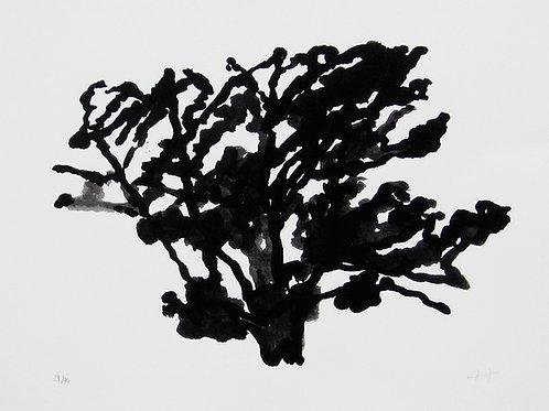 Hollan, Petit arbre