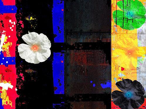 Jim D., Fleur de pierre IV