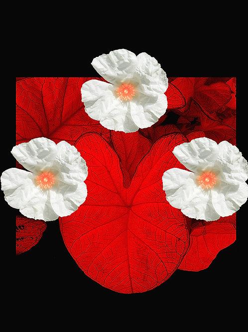 Jim D., Fleur de pierre rouge