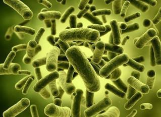 """Gut Bugs"" and Probiotics"