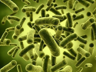 """Gut Bugs"" and Probiotics"