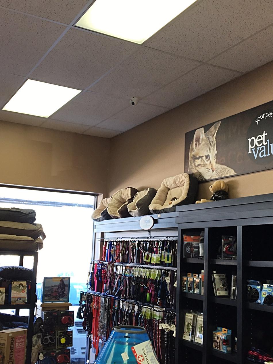 Retail Video Surveillance - Hamilton