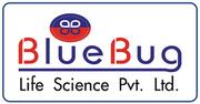 Blue Bug #logo