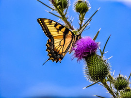 ButterflyOffParkway.jpg