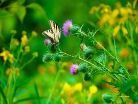 ButterflyColorCrush.jpg