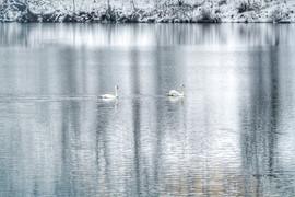 LakeJunaluska-SwanReflections4 (1).jpg