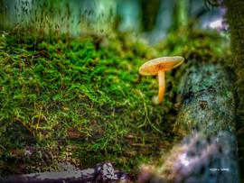 MushroomFlora.jpg