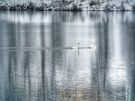 LakeJunaluska-SwanReflections3.jpg