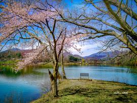 Spring Time Serenity - Lake Junaluska.jp