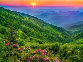 Blue Ridge Blossoms.jpg