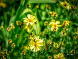 GoldenBouquet.jpg