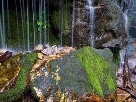 Nature's Shower.jpg