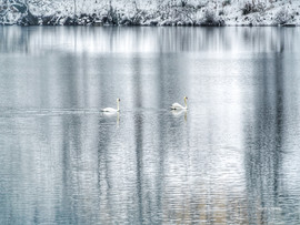 LakeJunaluska-SwanReflections4.jpg