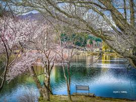 Spring Time Serenity - Lake Junaluska2.j