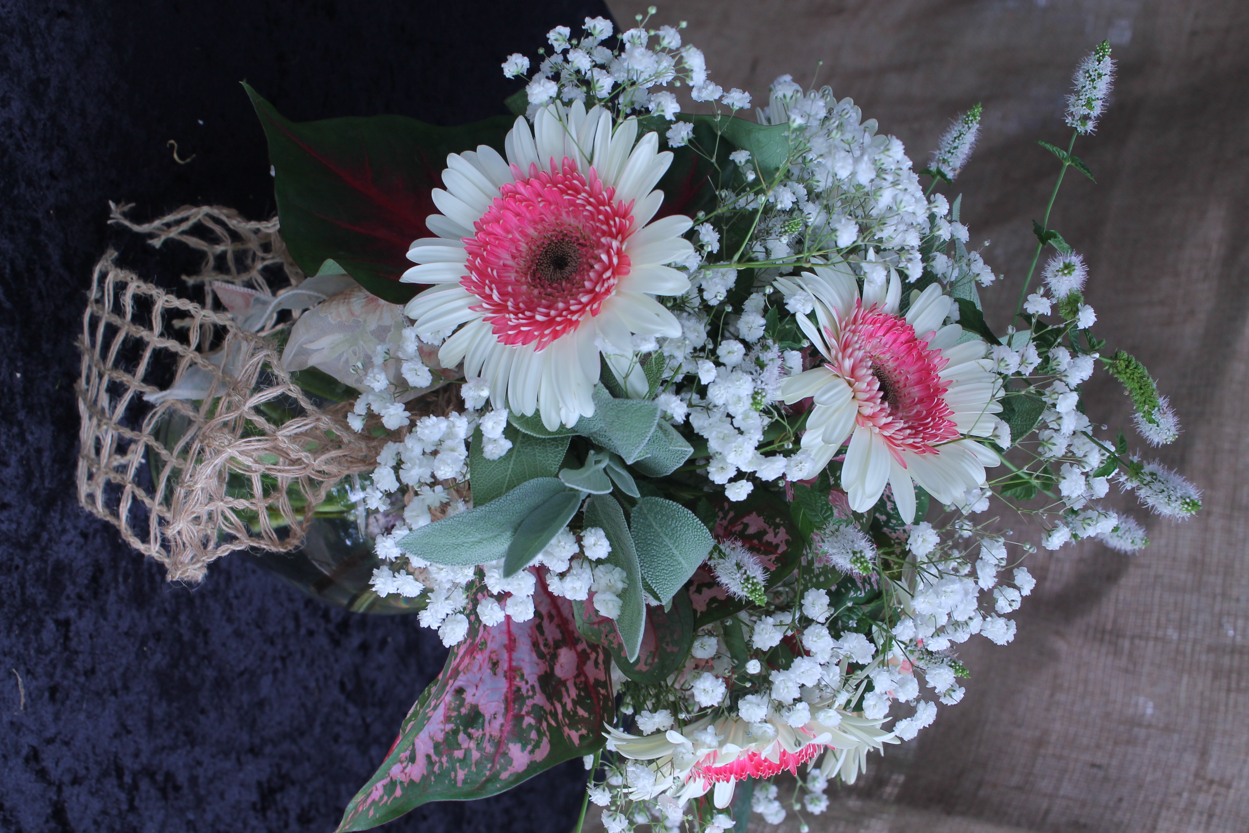 pink and white gerbera daisy