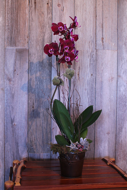 301 - Live Potted Purple Orchid