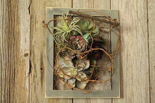 100 - Grey Framed Succulent