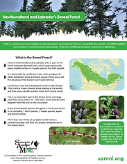 SAM NL Boreal Forest Factsheet_2019.png