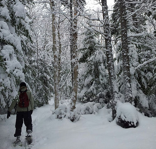 A person snowshoeing in a conservation area
