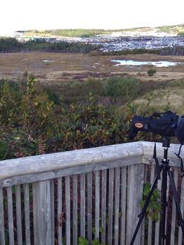 Marsh Monitoring Program
