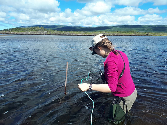2020-09-01_Liz_green crab trapping_12153