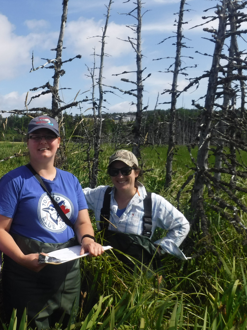 Scientific Research in the Marsh