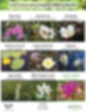2019_Website_Flower Guides.jpg