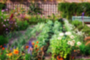69522591-vegetable-garden-in-late-summer
