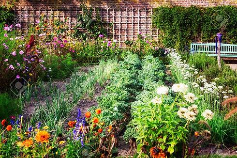 69522591-vegetable-garden-in-late-summer