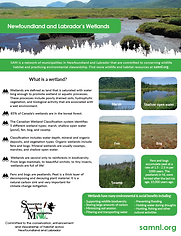 2020 SAMs Guide to wetlands image.png