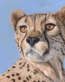 Focused - Cheetah oilpainting