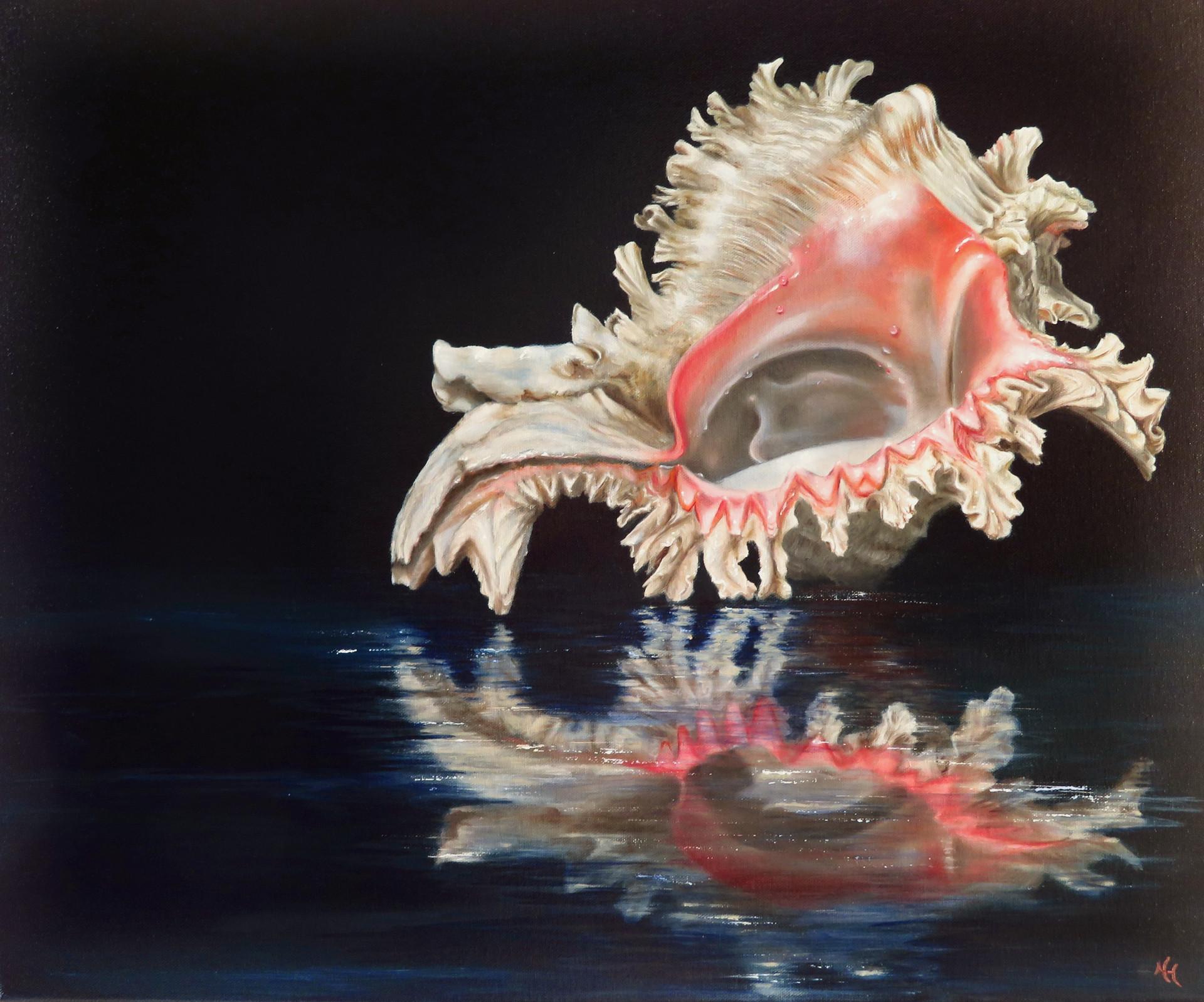 Seashell - Murex