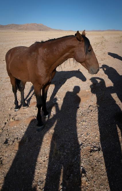 Wild Horse and paparazzi