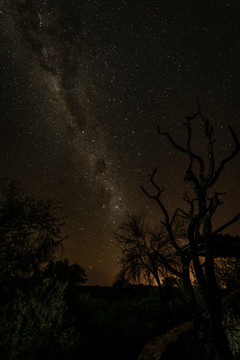 Milky Way over trees