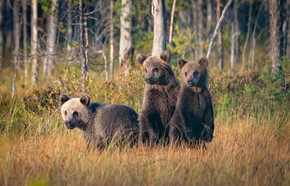 Keeping an eye on momma bear